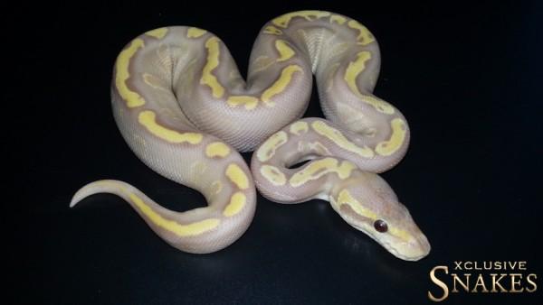 GHI-Mojave-Ultramel